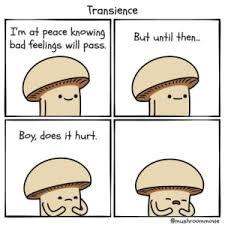 Transience, mushroom